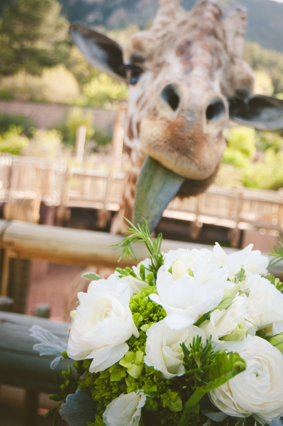 Nicolle+Dave  Cheyenne Mountain Zoo Wedding